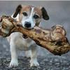 Phat Bone