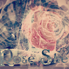 Rose Shell