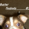Buster Peabody