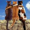 phatcatsjazz