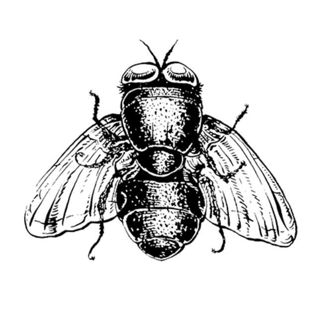 bottleflies