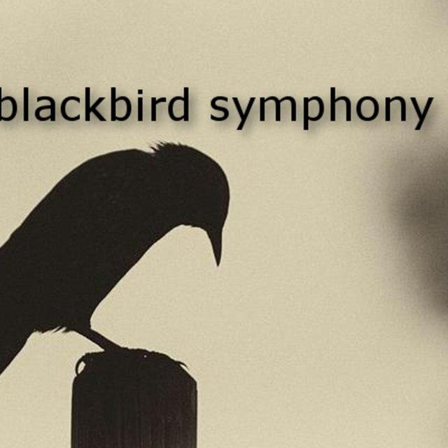 Blackbird Symphony