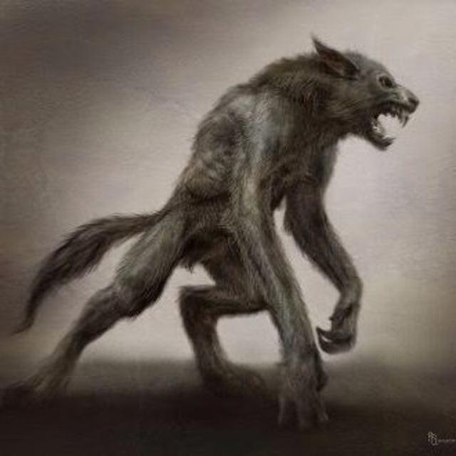 Dogman13