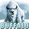 whitebuffalo1960