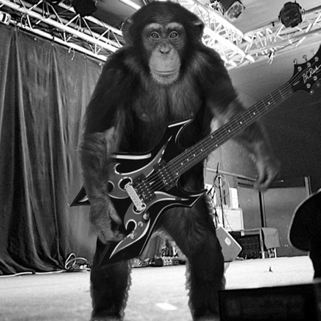 tony monkey