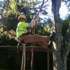 evergreen1153160