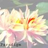 ParadigmsInaBand
