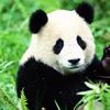 Pandastyle2837