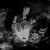 shamanjon