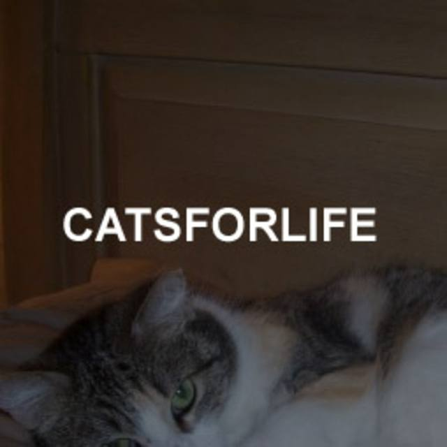 catsforlife