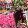 rosesolutionfl