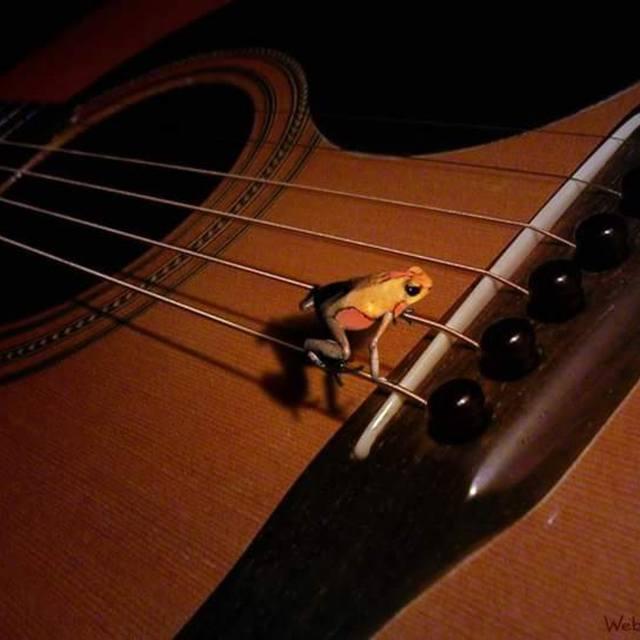 GuitarTunz