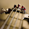 Bass x 109