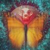 Butterflies_on_radar