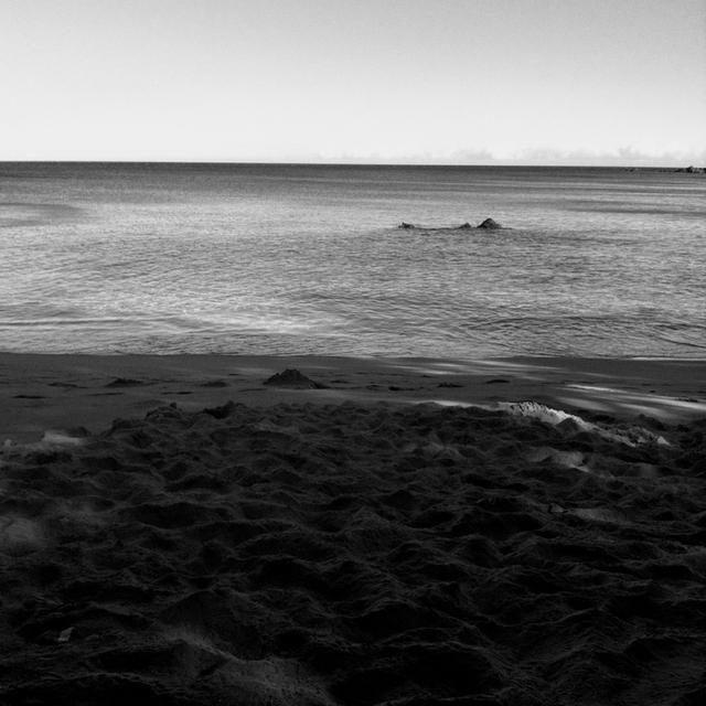 Past Dog Beach