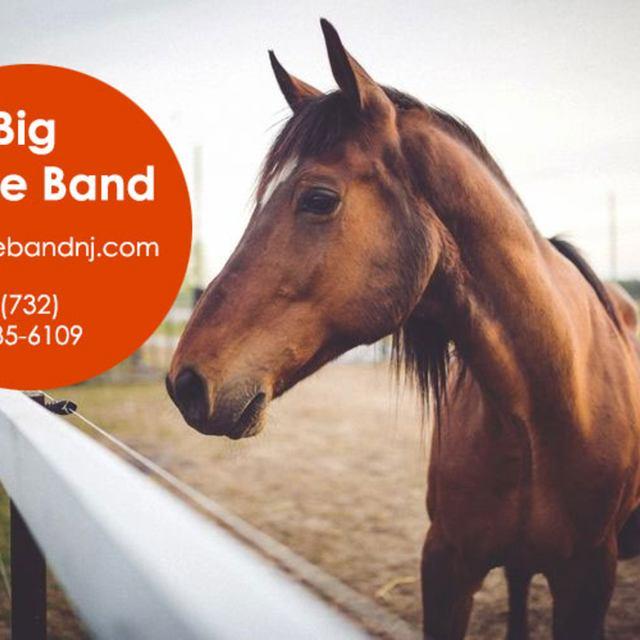 Big horse band