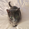 kitty1360232