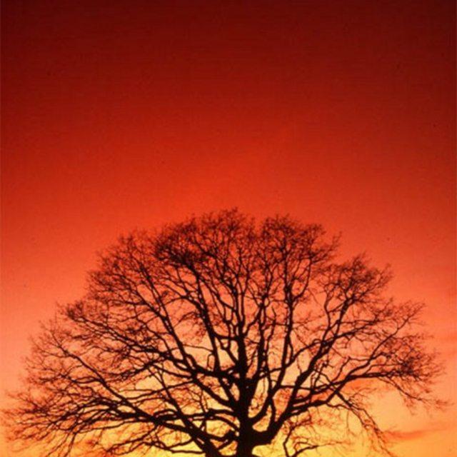 Sol-Tree