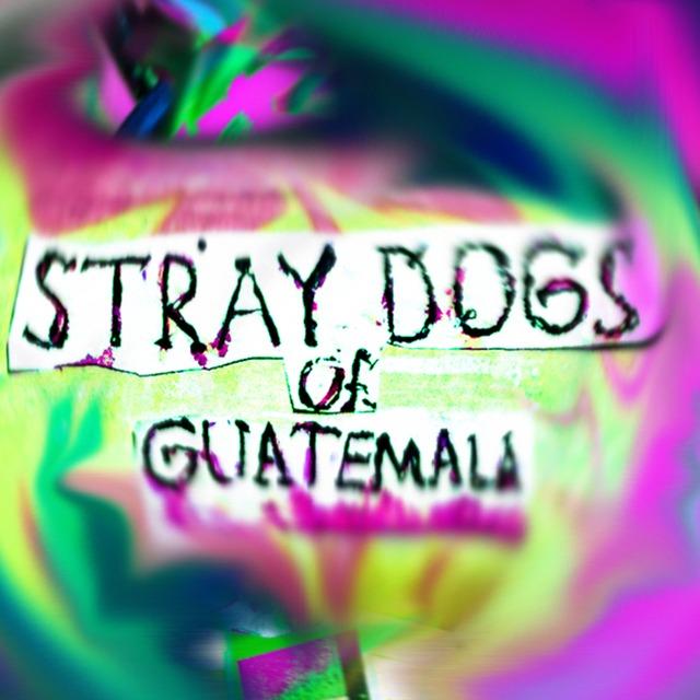 StrayDogsofGuatemala