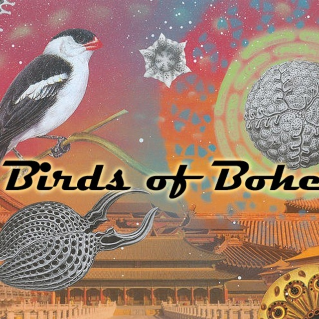Birds of Bohemia