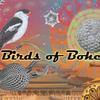 birds_of_boho