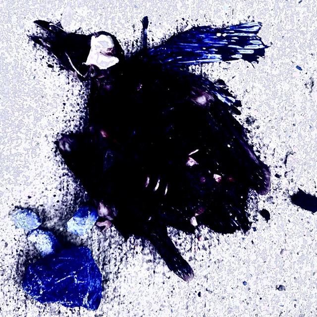 Dead Pedrick