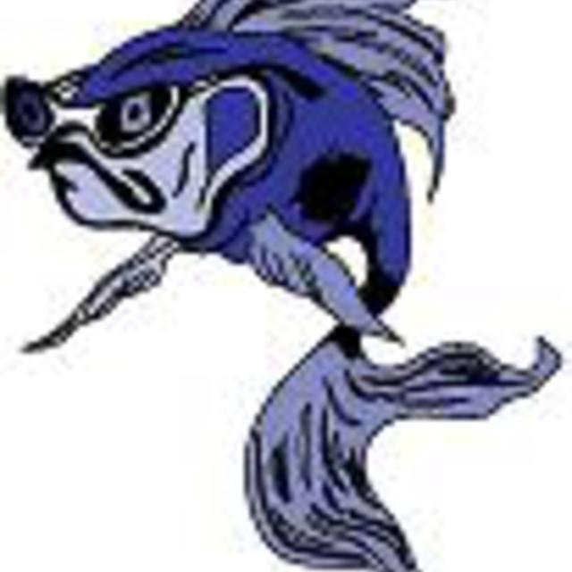 Coolfish Rock N Blues