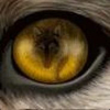 saxonwolf