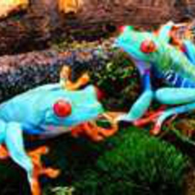 EcLecTic FrOg