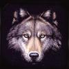 timberwolfmusicagency