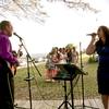 BRAZIL FLAVOR MUSIC