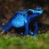 Bluefrog5