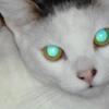 Catsphemy