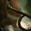 the horn man jc