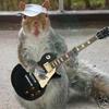FuriousSquirrel