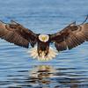 Eagle10101