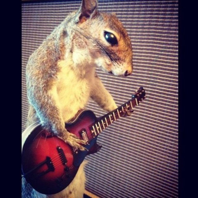 Squirrelcage