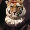 Buzz Cut Tiger