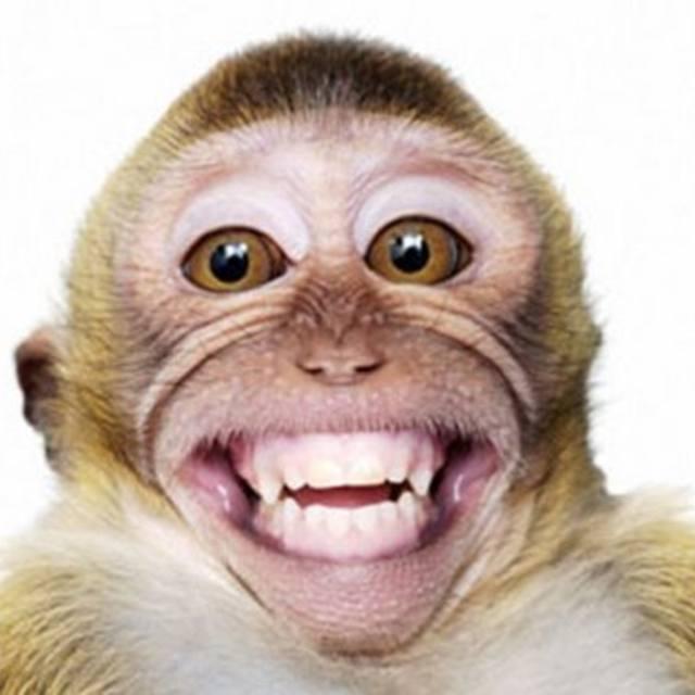 King Monkeyface